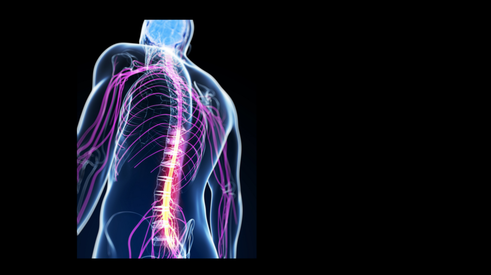 Spinal    Treatment    LEARN MORE