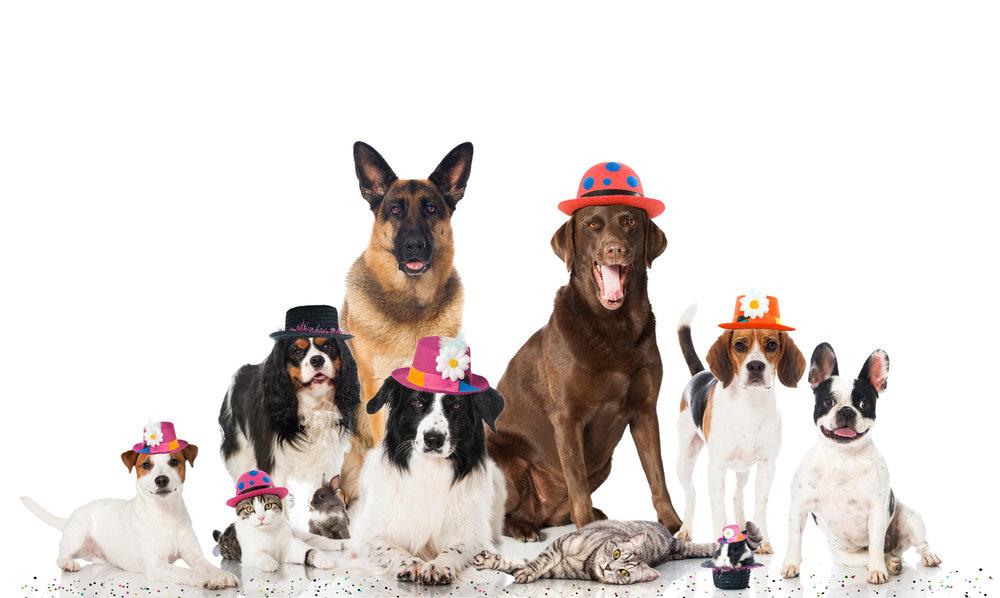 7191ed59016 Nytårsangst hos hunde og katte — Skørping Dyreklinik