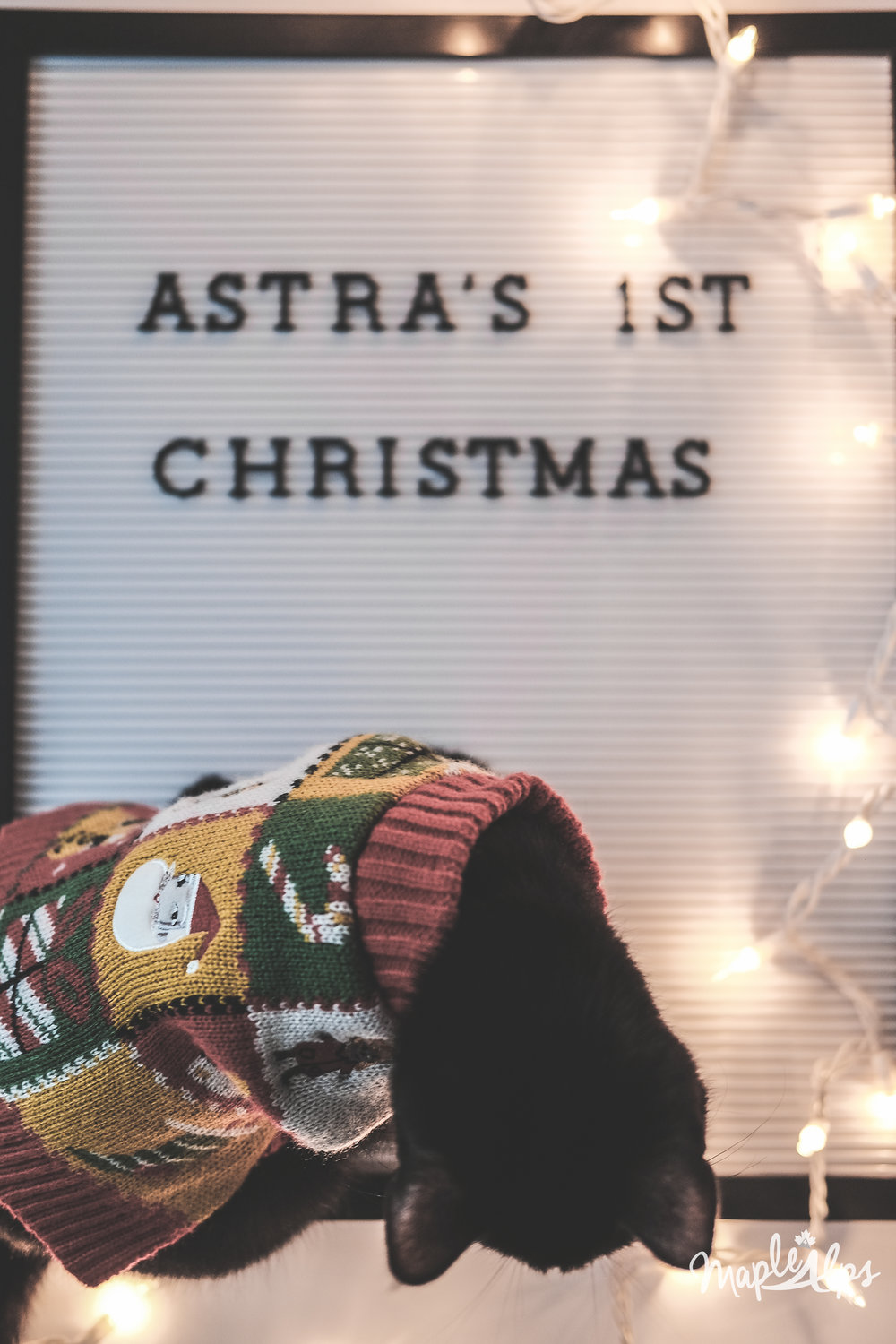 Astra's First Christmas | www.maplealps.com