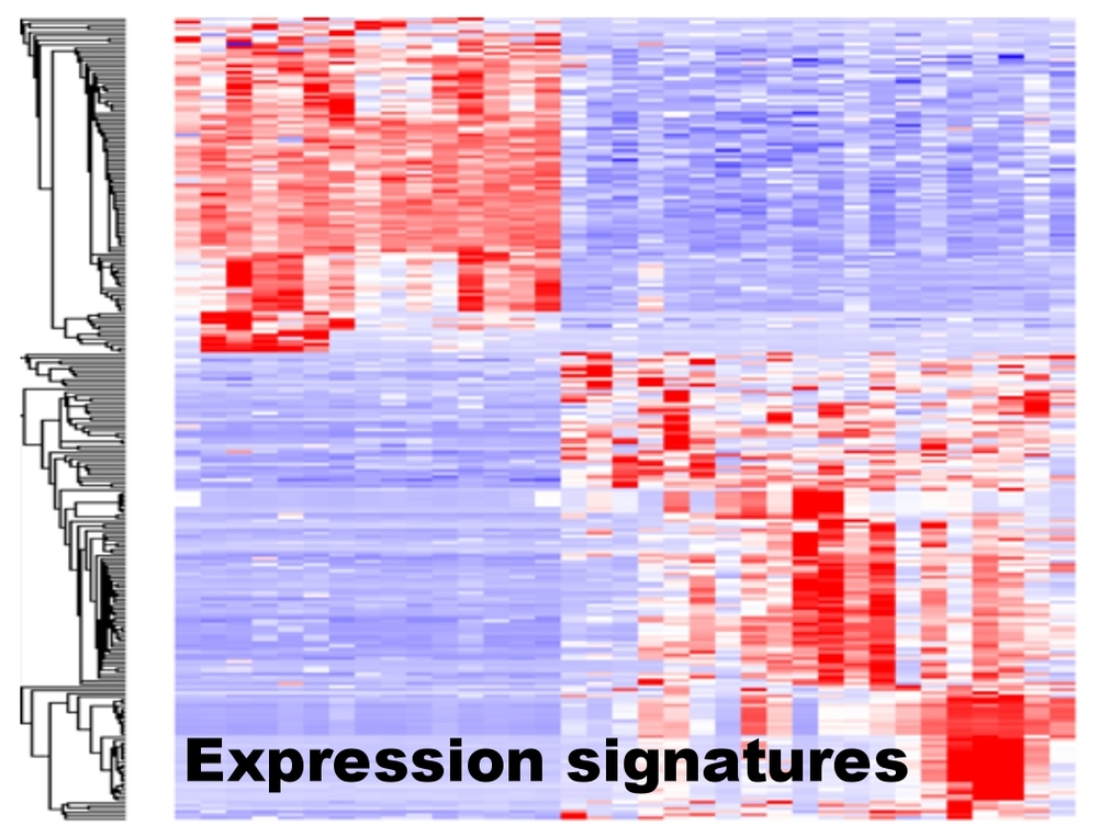 gene expression heatmap.jpg