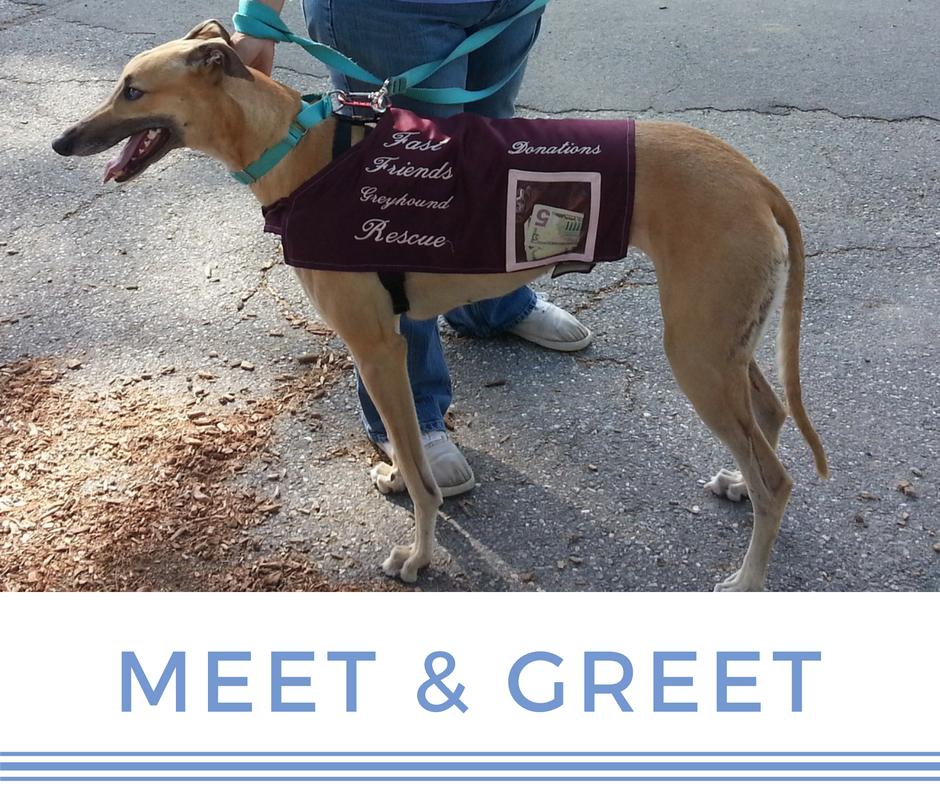 Meet greet at one stop fast friends greyhound adoption m4hsunfo