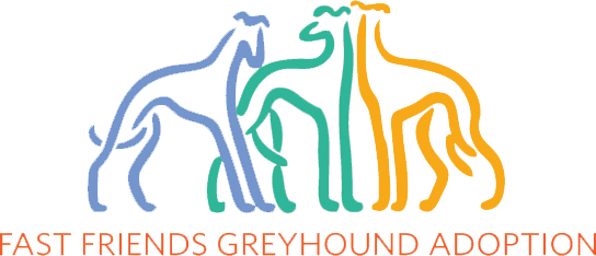 fast friends greyhound adoption
