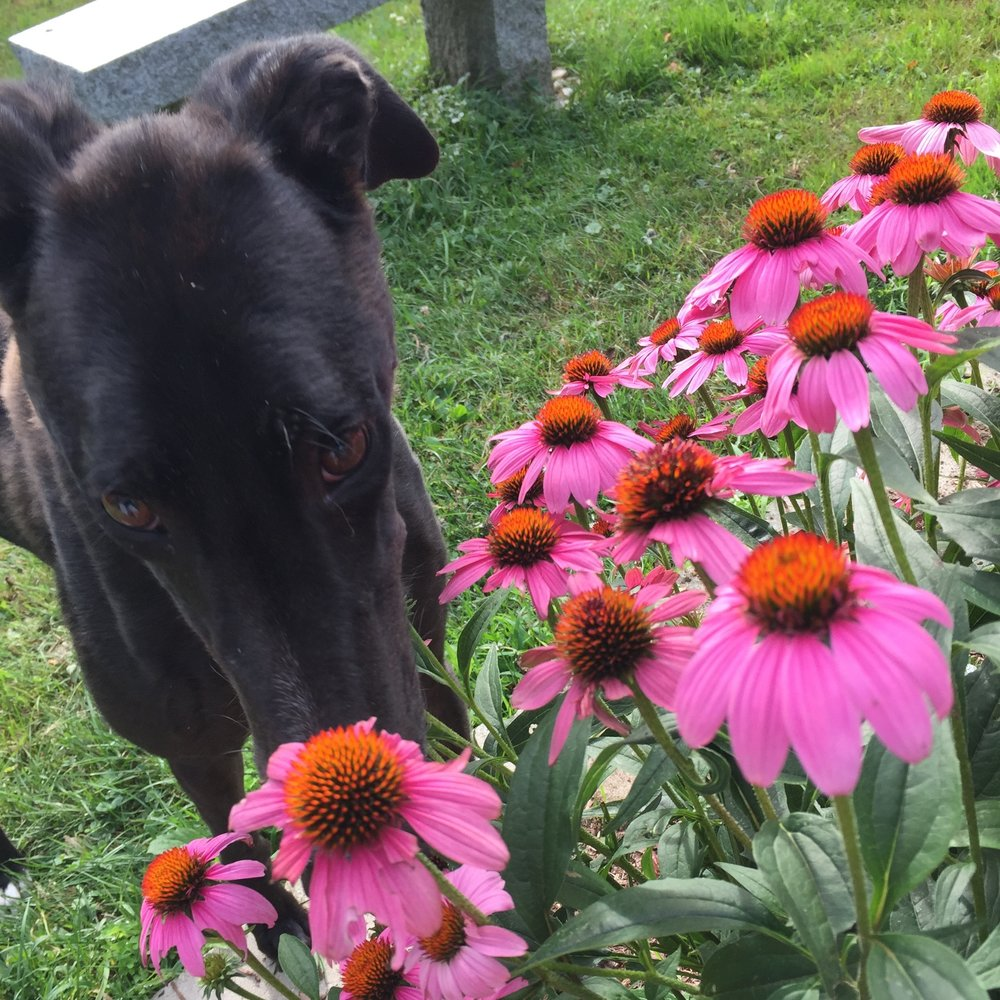 Nate is a sweet boy who likes to stop and smell the flowers.
