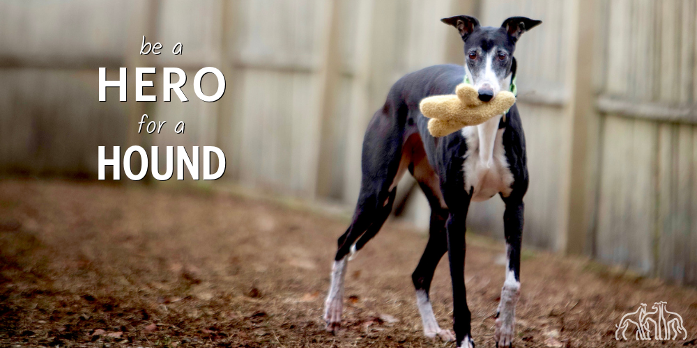 be a HERO for a HOUND