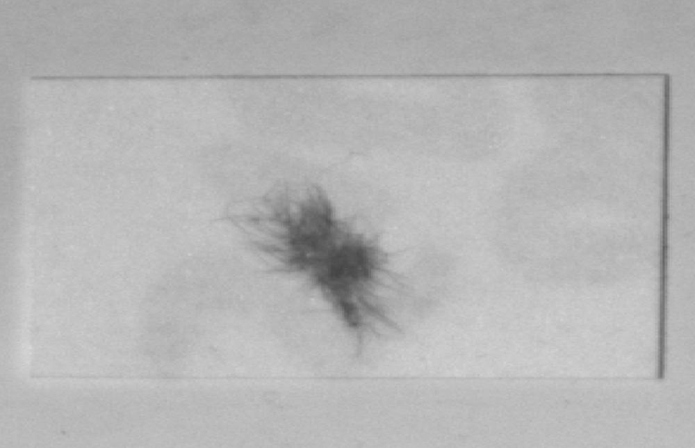 300 Hair