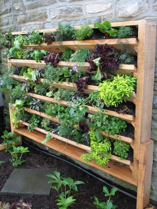 From garden to table-an herb and vegetable garden can be built in!