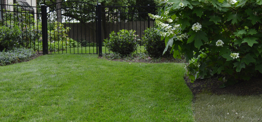 The grass is always greener with Terren Turf Care.