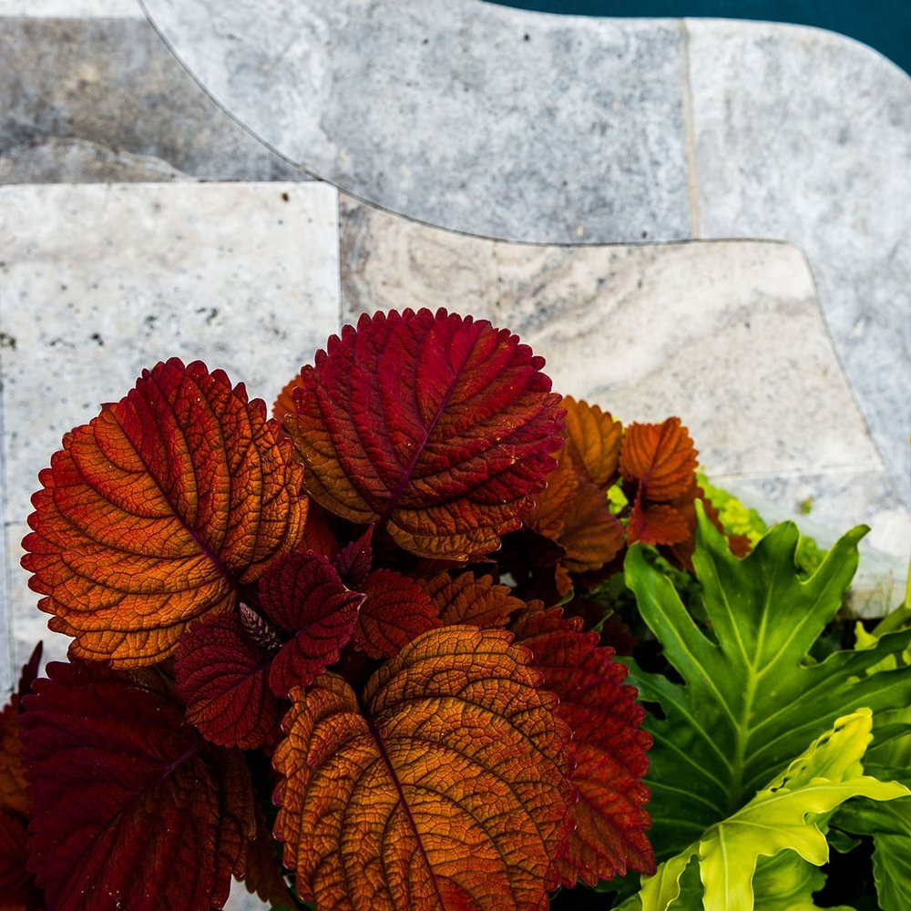 COLEUS | Keystone Copper