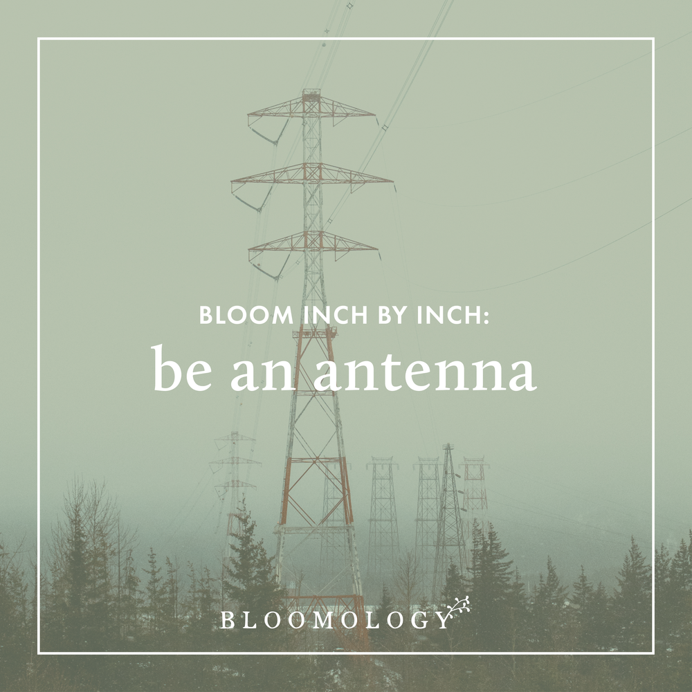 Bloom Inch by Inch: Be an Antenna | Bloomology.co