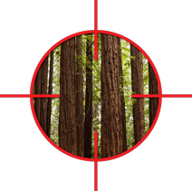 Forest-Scope.png