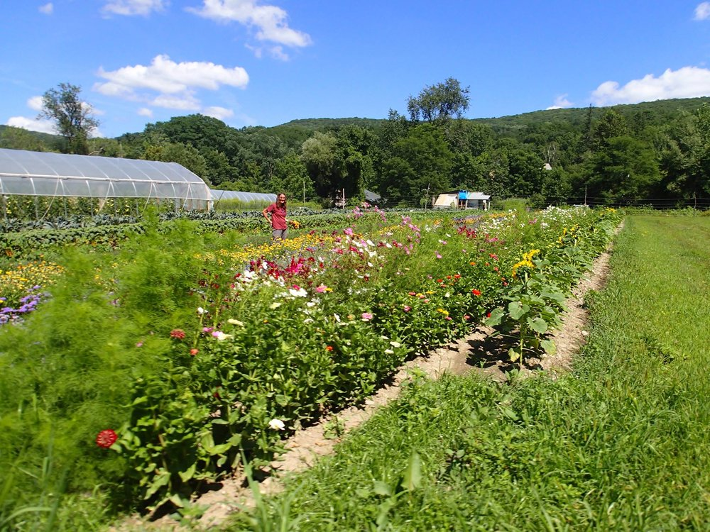 Abode Farm CSA in New Lebanon, New York offers 'U PICK' for shareholders as a way for members to pick their own flowers and produce.