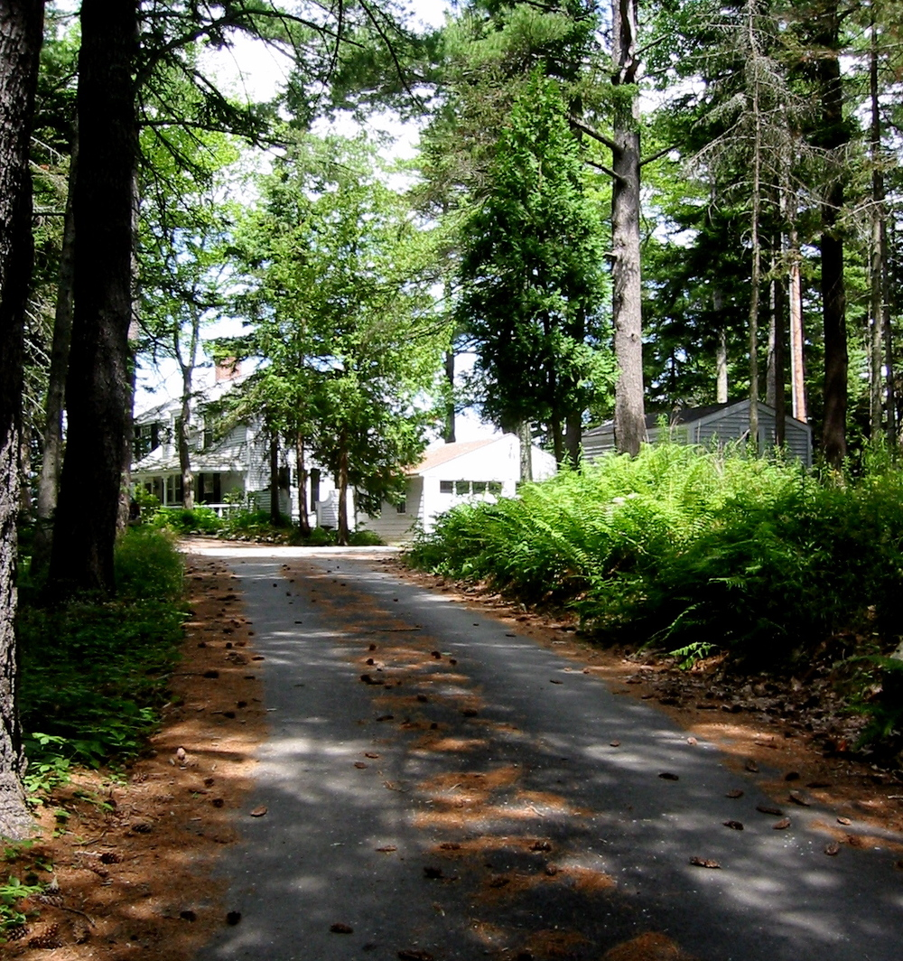 White pines line the drive up to the main estate.
