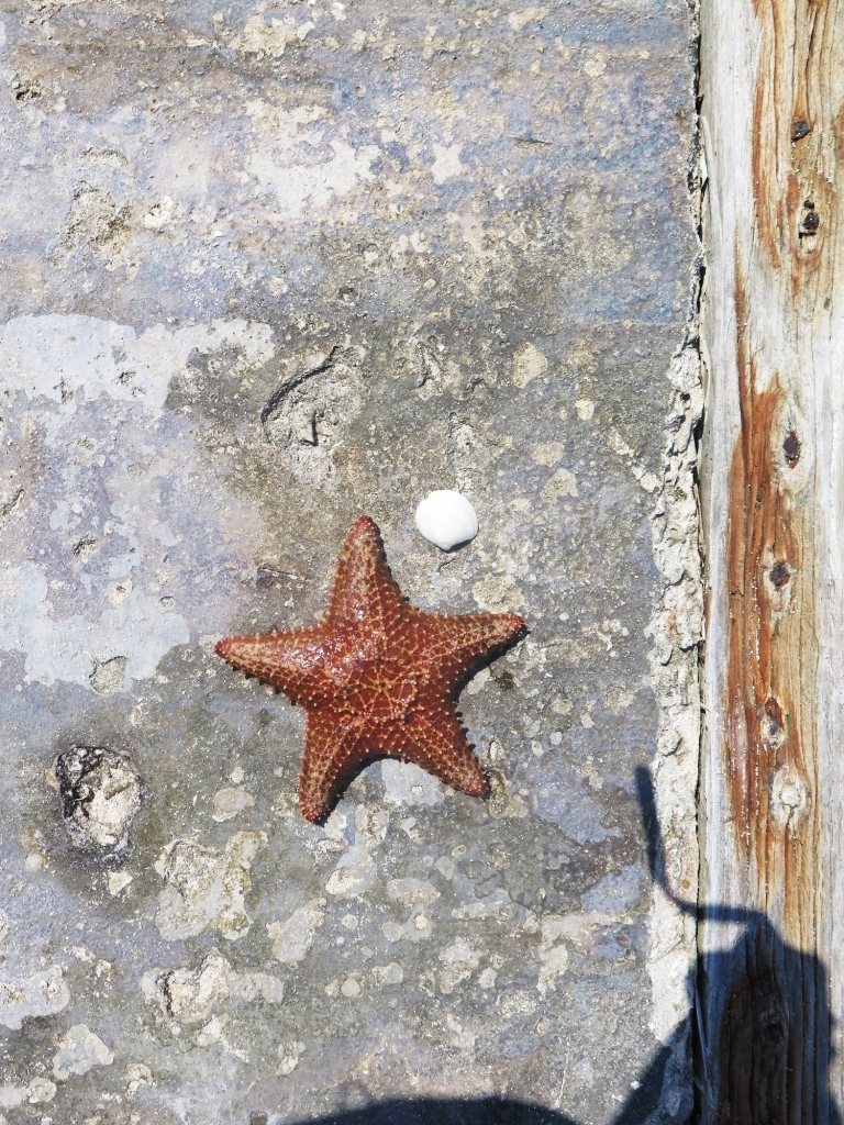 Starfish, Rosario Islands, Cartagena, Colombia