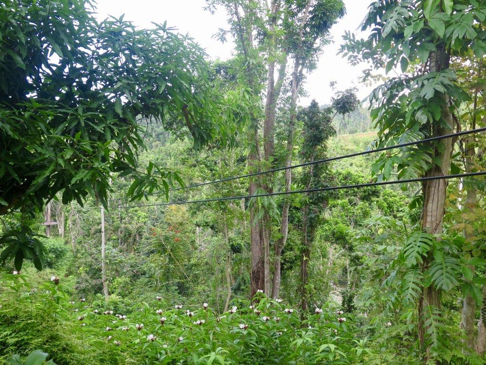 Zipline, El Yunque National Rainforest, Puerto Rico