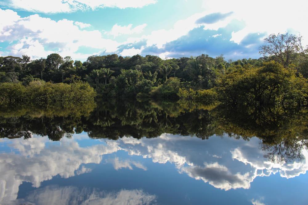 Amazonal reflectivity