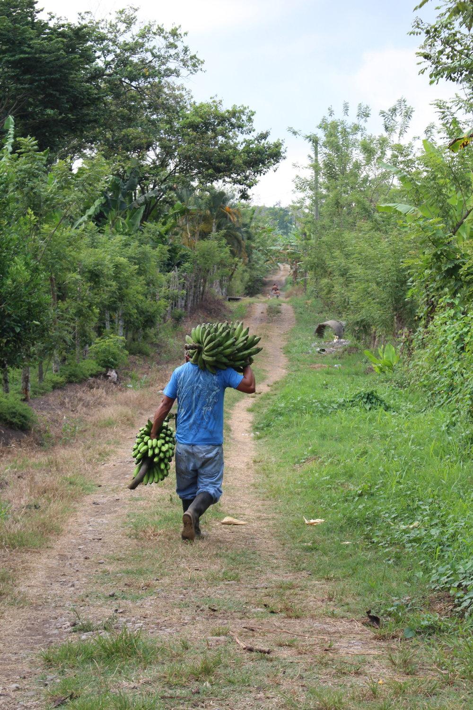 A Honduran banana farmer.