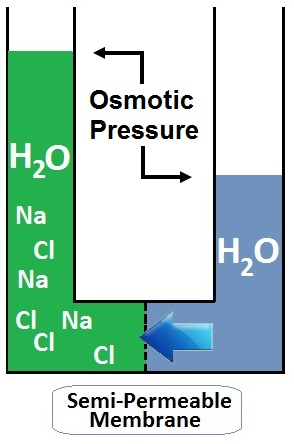 Osmosis Diagram-.jpg