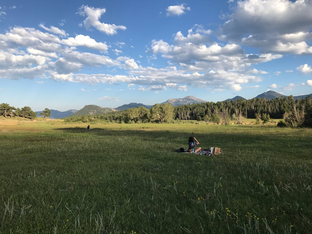 Picnickingat Rocky Mountain National Park as a herd of Elk pass by.