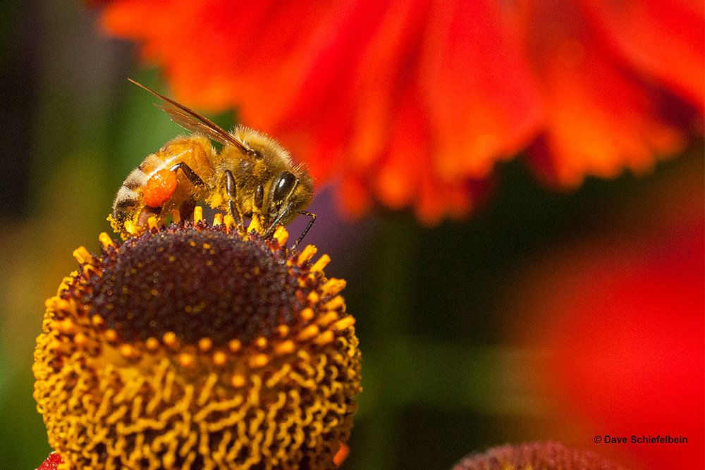 BeeOnFlower_0178_horizontal.jpg