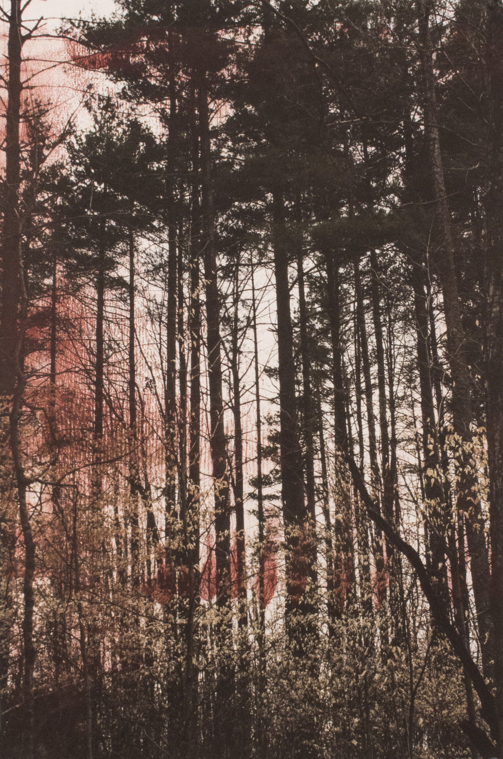 Spring Trees at Lake Monroe