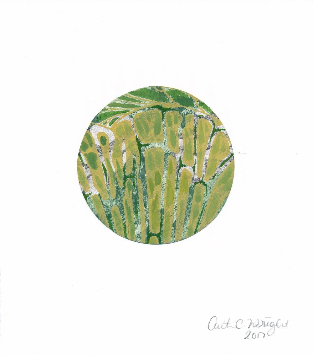 CircleS144.jpg