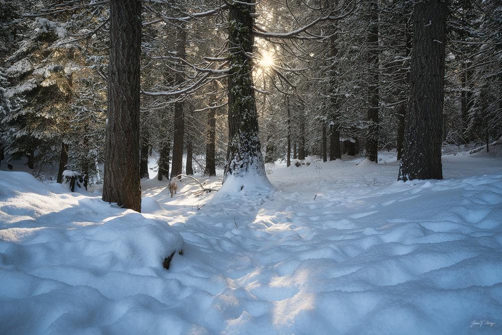 Winter's Radiance