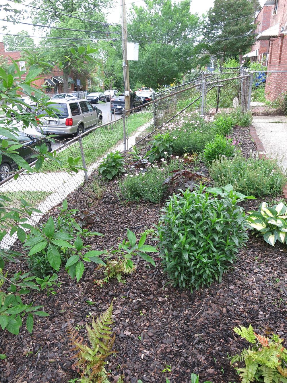 BS - Gardens and Pots - Vaughn Perry - 750 Congress Street SE 10.JPG