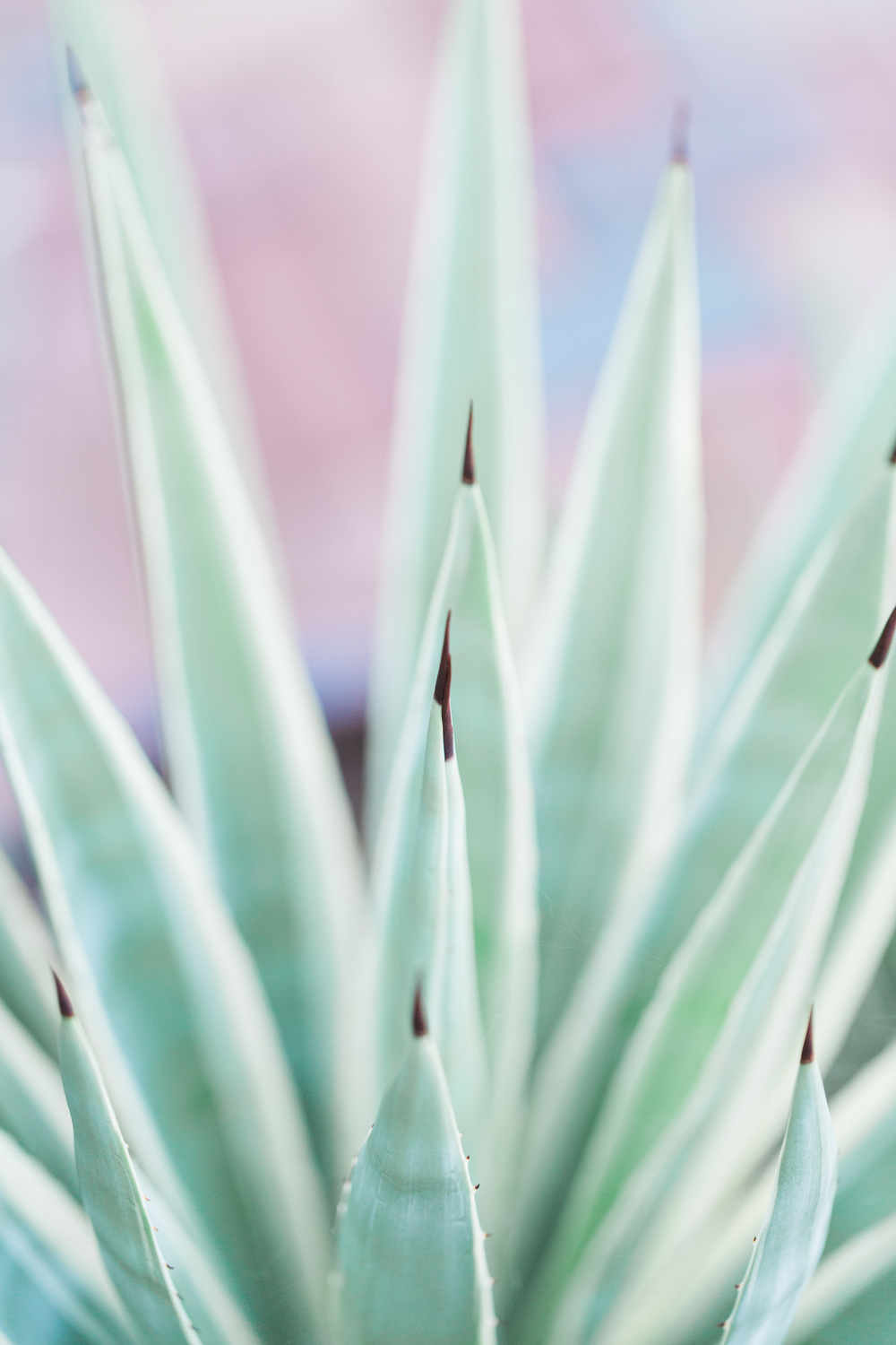 Agave Plant | Superstition Mountain Golf Club Wedding | Phoenix Wedding Photographers | See more at BetsyandJohn.com