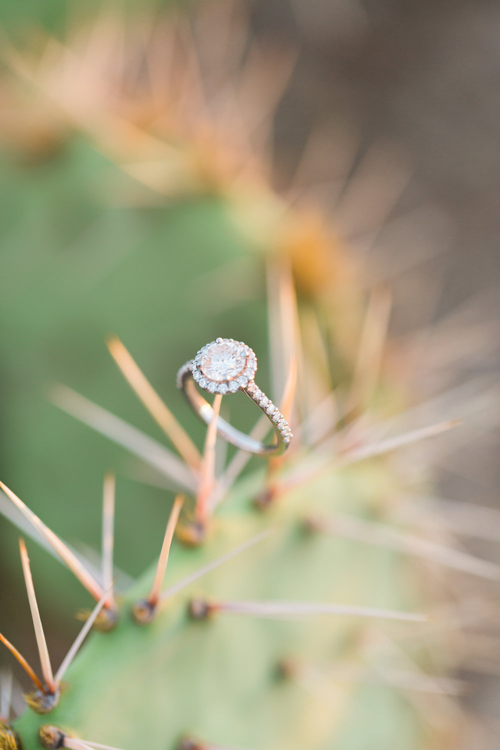 How gorgeous is this halo diamond engagement ring on this cactus? We love ring shots like this!!