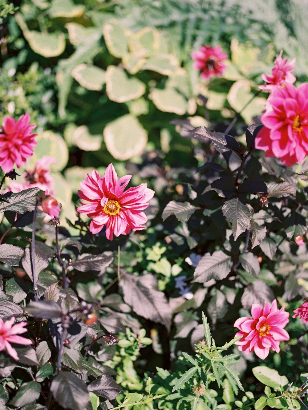 conservatory-garden-2.jpg