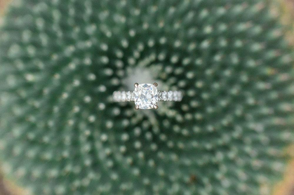 cactus-ring-shot.jpg