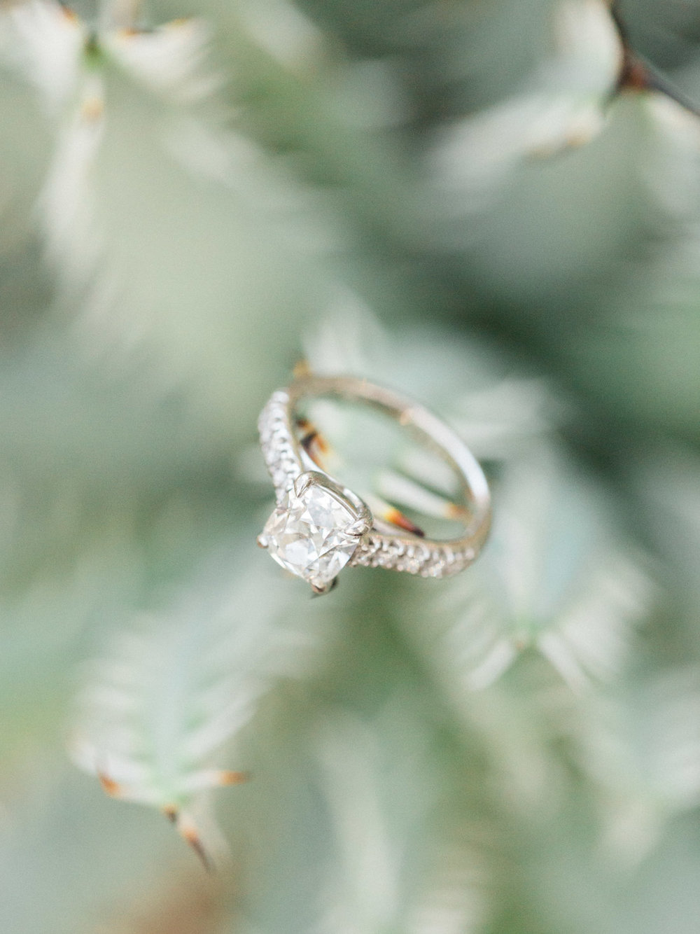 cactus-engagement-ring-shot.jpg