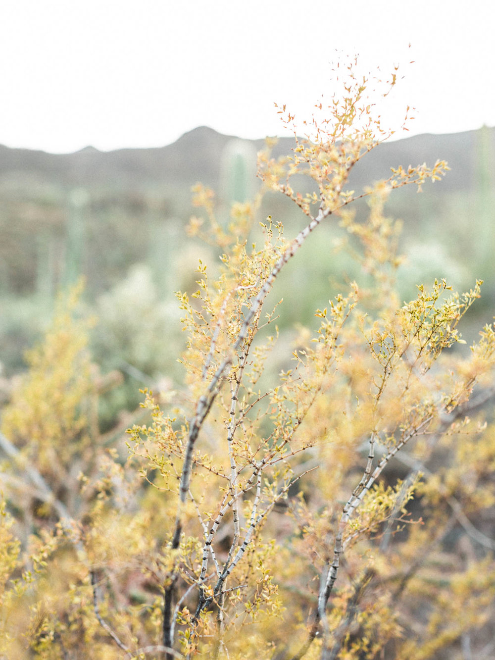 tucson-desert-engagement-session-41.jpg