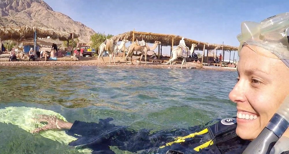 Camels walk along the shore as I prepare to descend. Scuba Diving in Dahab, Egypt is incredible!