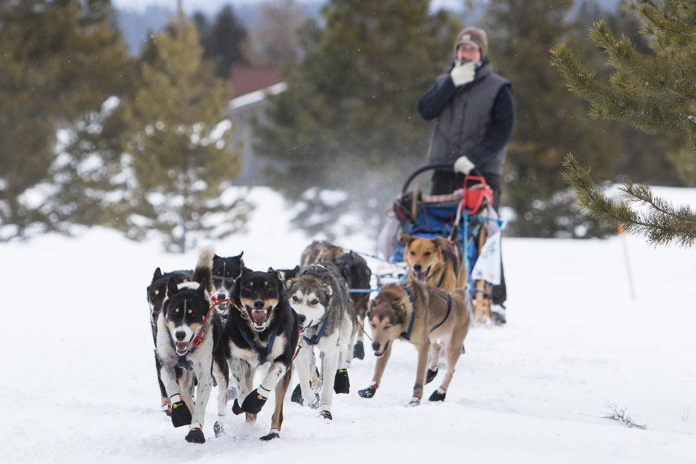 A musher rounds the first corner of the course.