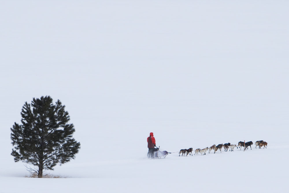 A musher makes his way through the course.