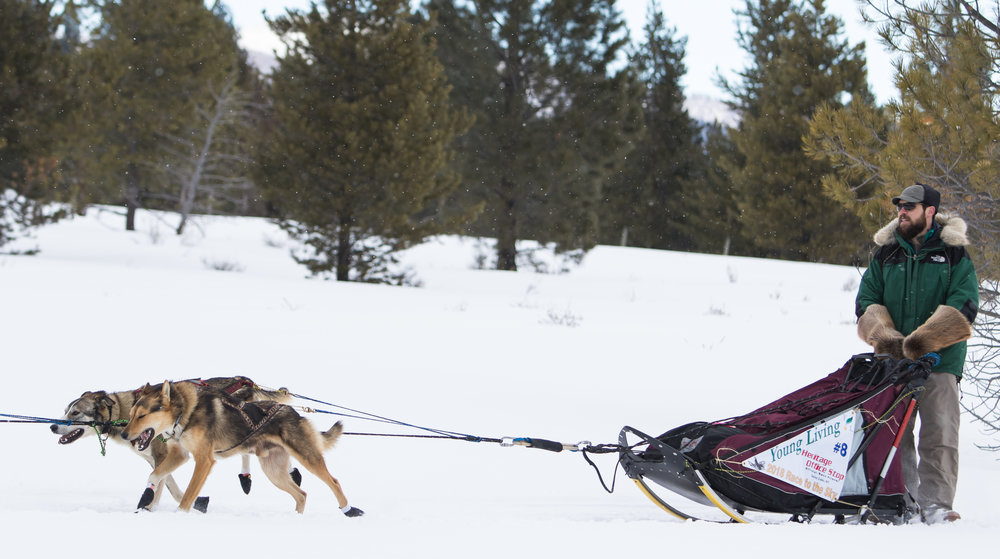 A musher calls to his dogs at the beginning of the race.
