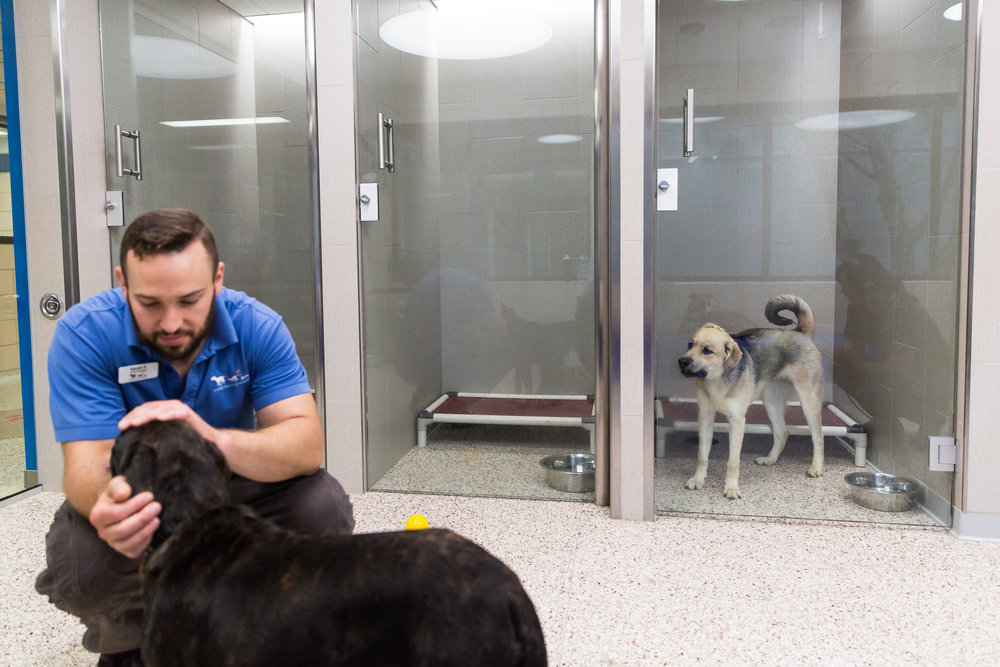 Animal care technician Kevin Feeback interacts with a dog while another dog, who was put in his den for a timeout, looks on at the Animal Humane Society in Golden Valley, Minn. on June 19, 2018. (Lacey Young, MPR News)