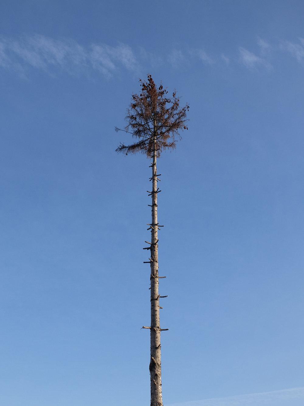 08 - tree tip.jpg