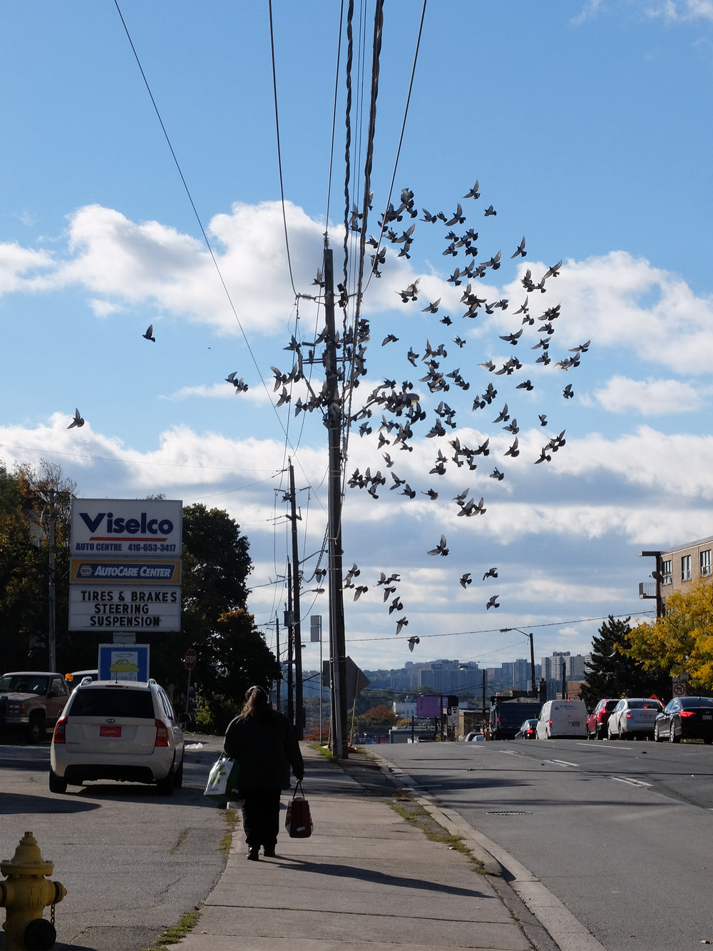 21 - girl birds.jpg