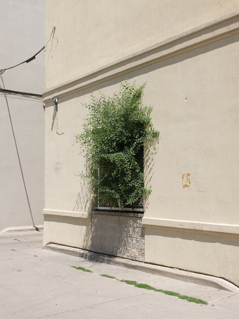 window bush copy.jpg