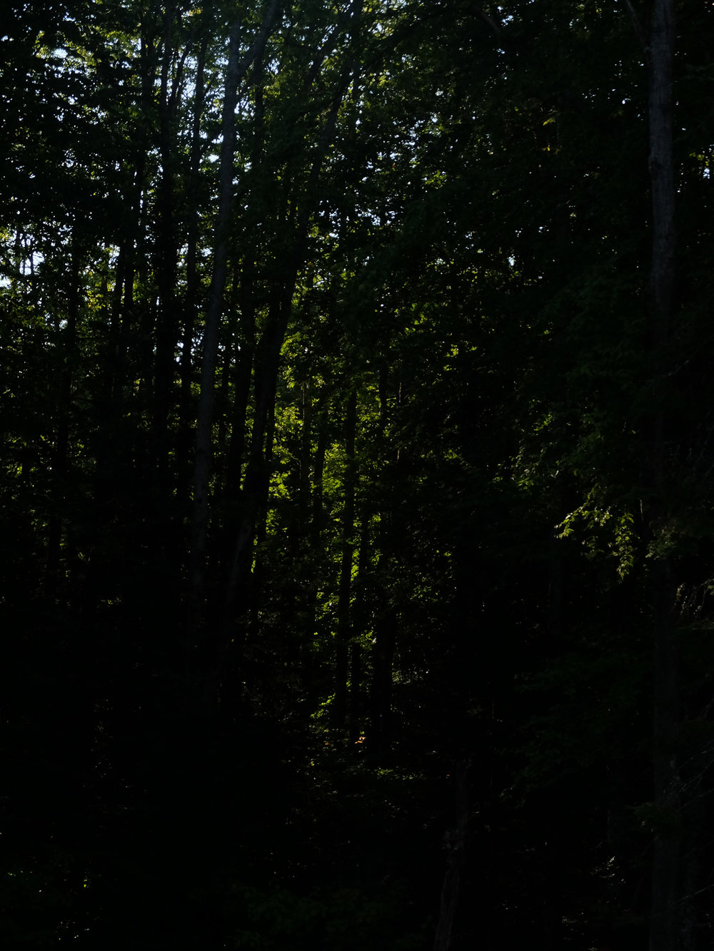 21 - dark forest.jpg