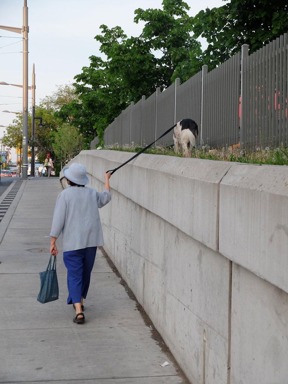 dog walker.jpg