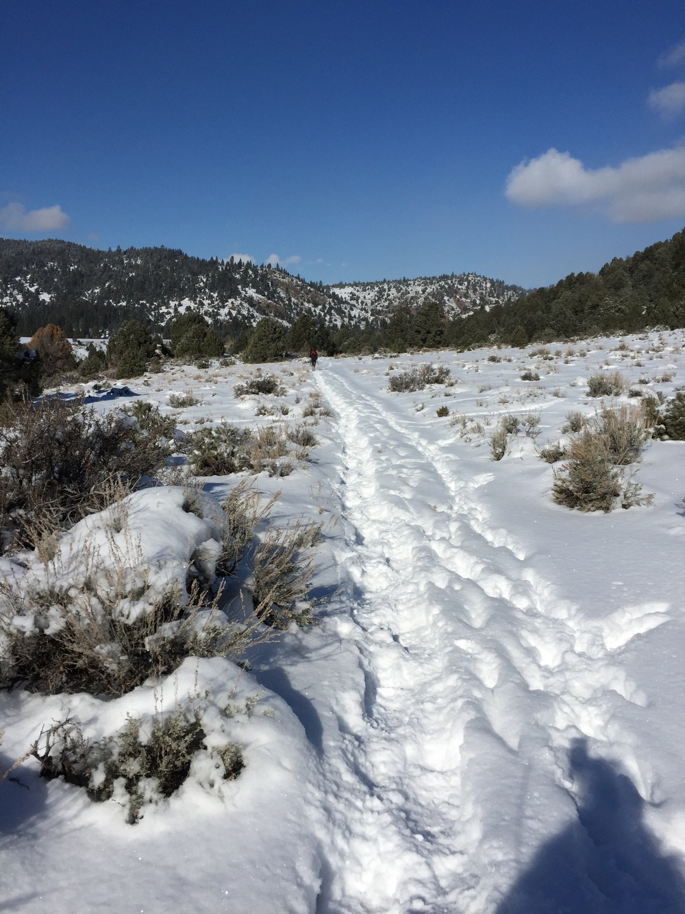 On a snowshoe hike on one of our favorite trails near the Carson River near Markleeville, CA