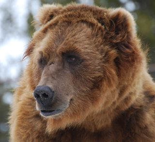 big bear.jpg.jpg