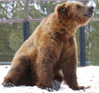 happy bear in snow.jpg.jpg