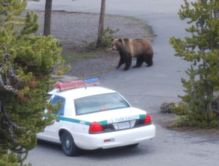busted bear.jpg copy.jpg