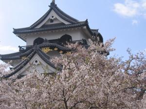 hikone castle.jpg