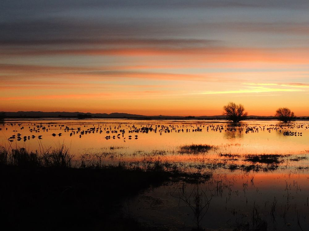 Sunset over the Merced National Wildlife Refuge in California's Central Valley (photo by Cindy Jacobo)