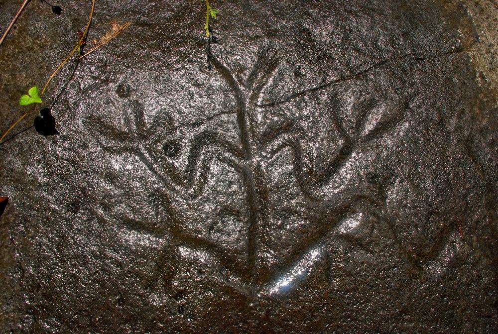 Taino Petroglyph